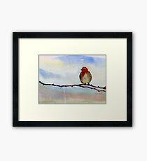 Robin 1 Framed Print