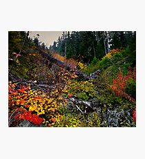 The Colors Of Fall ~ Oregon Cascades ~ Photographic Print