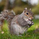 Happy Squirrel by Jon Bradbury