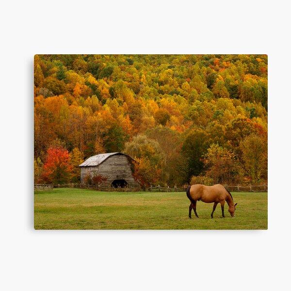 Autumn Graze Canvas Print