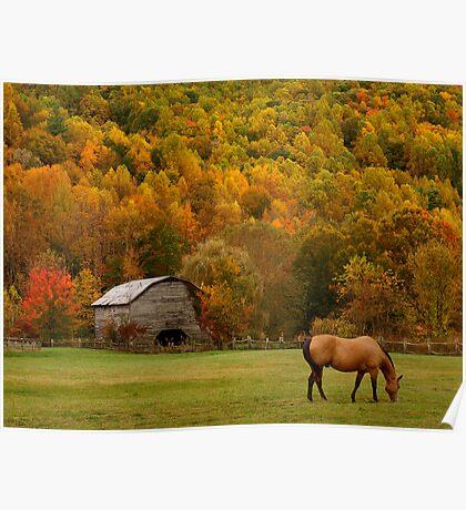 Autumn Graze Poster