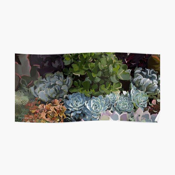 Magical Succulents Poster