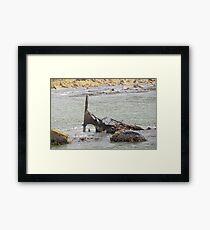 Ship wreck at Betty's Bay Framed Print
