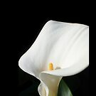 Calla Lily iPhone Case by Shaina Haynes