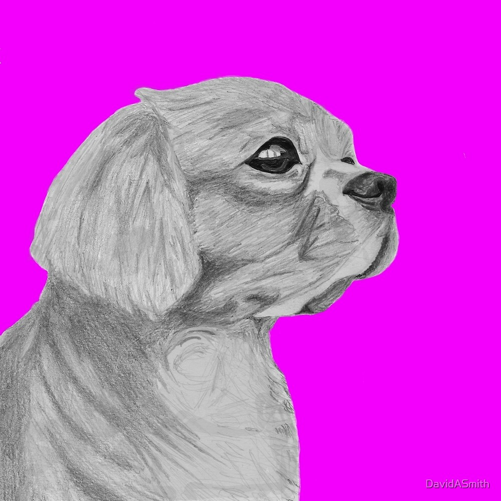 Cavalier King Charles Spaniel in Pink by DavidASmith
