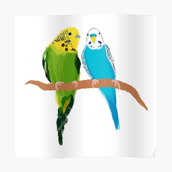 Budgie and Bottle Brush parakeets  Poster