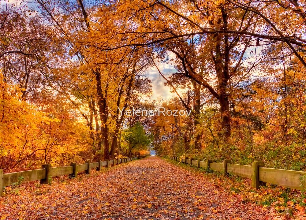 Spectacular fall solitude by Yelena Rozov