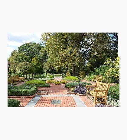 An Herb Garden Photographic Print