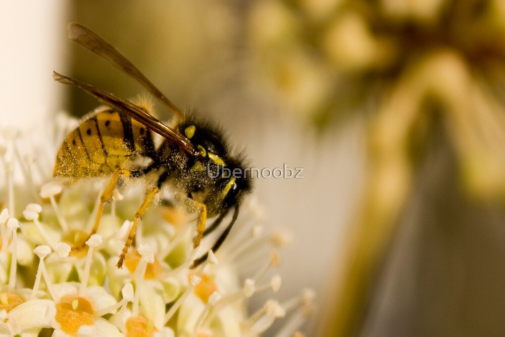 Wasp by Ubernoobz
