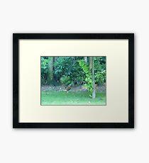 The Crazy Rooster sprint Framed Print
