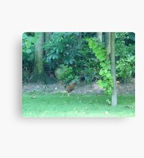 The Crazy Rooster sprint Canvas Print