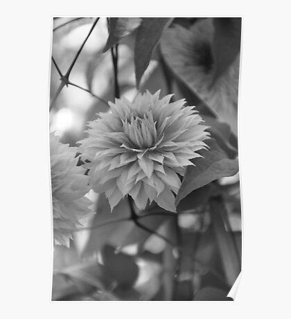 Gentle Flower Poster