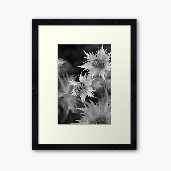Bee on Thistle Framed Art Print