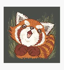 Joy of Red panda Photographic Print