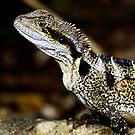 Female Water Dragon by john  Lenagan