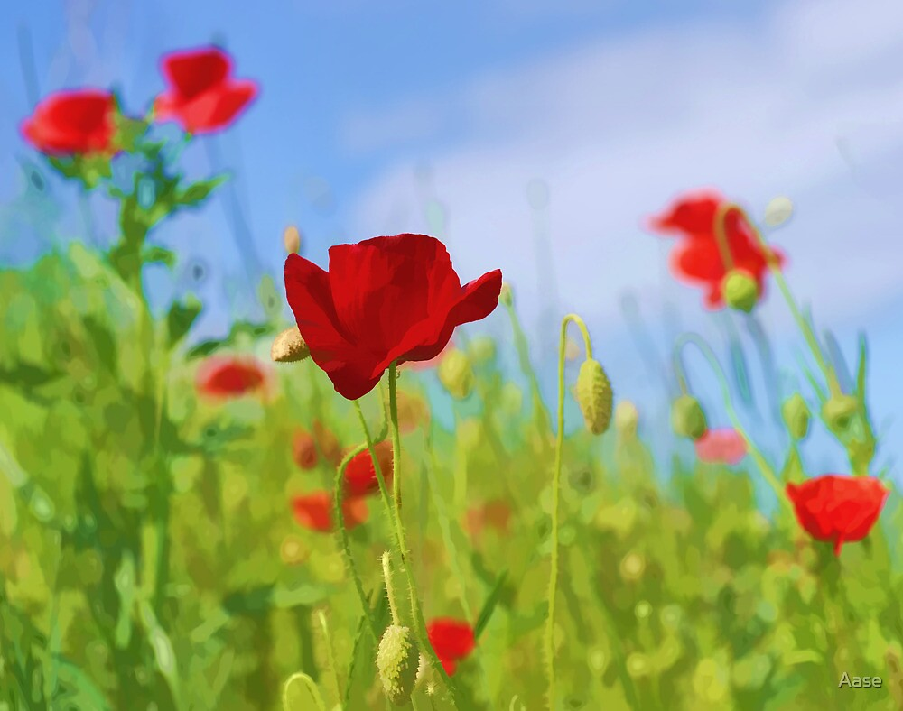 Poppies by Aase