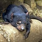 Tasmanian Devil #1 by Karen Stackpole