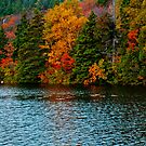 Fall in Newfoundland by PFrogg