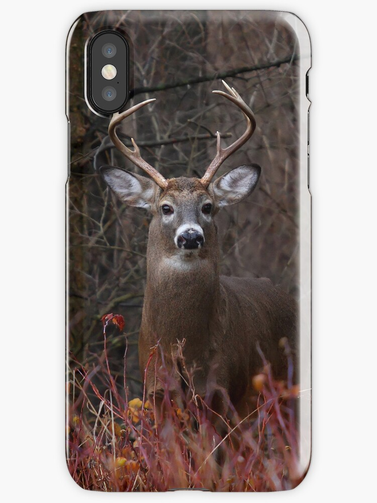 Buck Alert - iphone Case by Jim Cumming