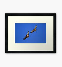 Red Tails Together in Flight Framed Print