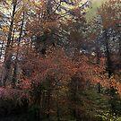 The Enchanted Wood by David Carton