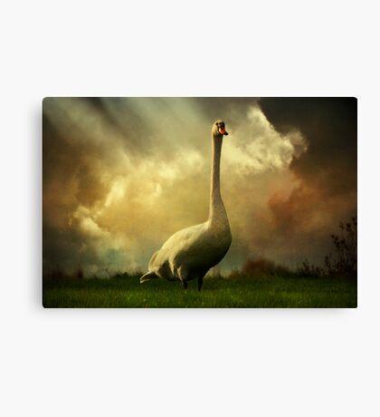 Swan Scene Canvas Print
