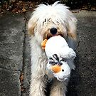 I Found this Duck... by Roz McQuillan