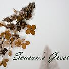 Winter's Flower by Sam Warner