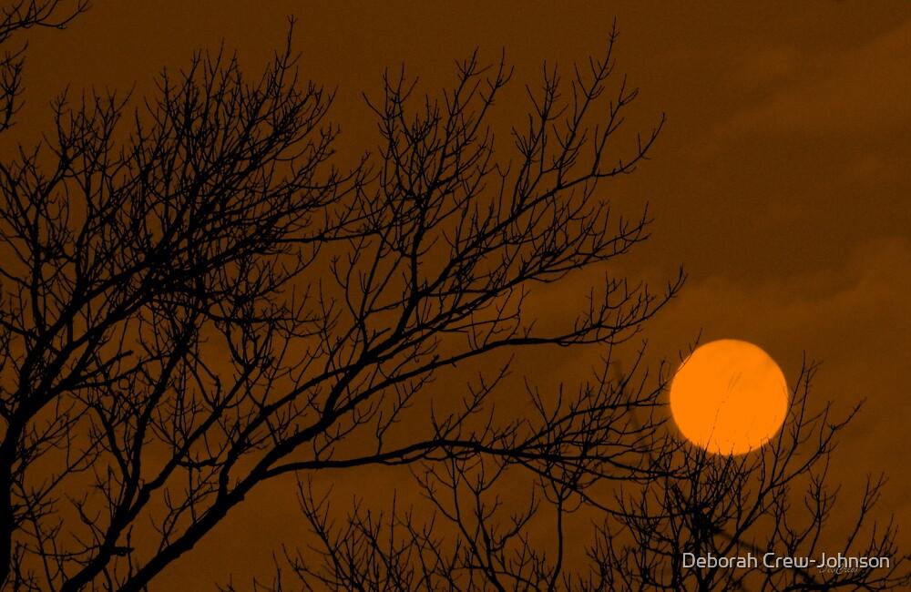 Sunset Moon by Deborah Crew-Johnson