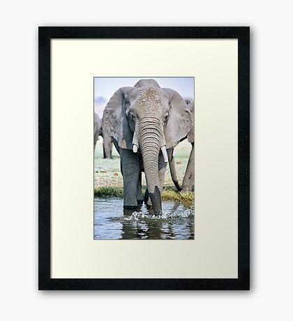 Thirst On The Chobe River Framed Print