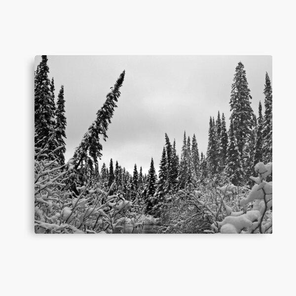 Deep Snow in the Woods Metal Print
