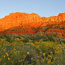Snow Canyon State Park - Utah by Greg Earl
