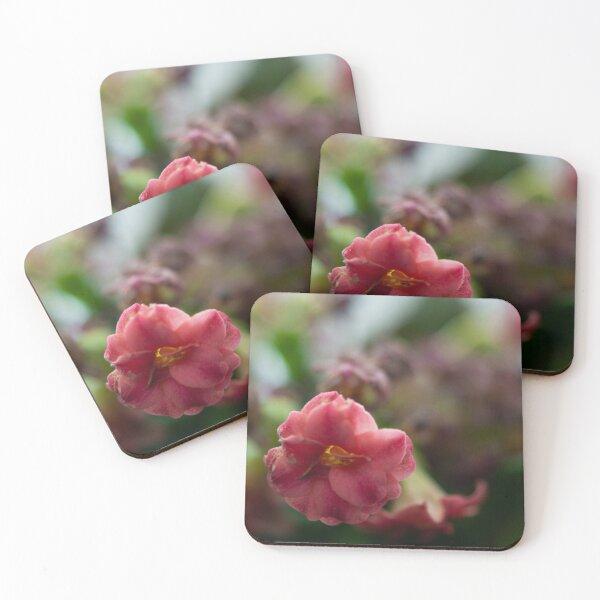 Softly growing Coasters (Set of 4)