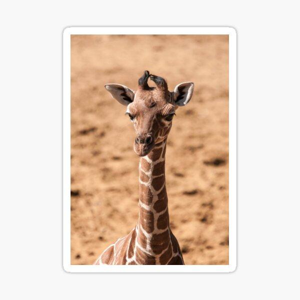 Giraffe Photography  Sticker