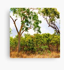 Eucalyptus Trees and Dry Grass Canvas Print