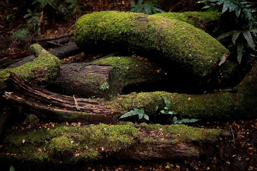 Rain Forest Floor by Rob Chiarolli