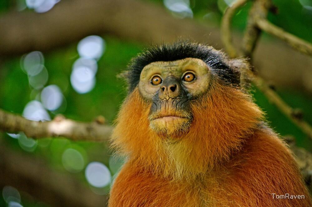 Monkey See Monkey Do by TomRaven