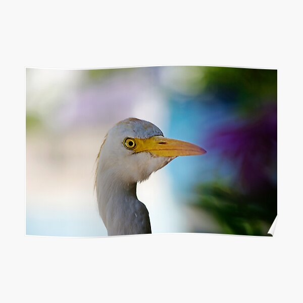 Inquisitive Egret Poster