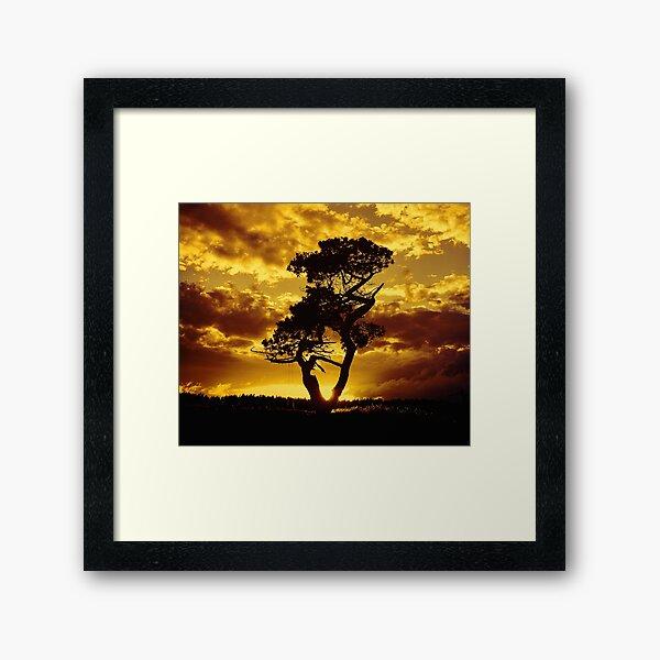 Tree Dance 2 Framed Art Print