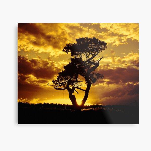 Tree Dance 2 Metal Print