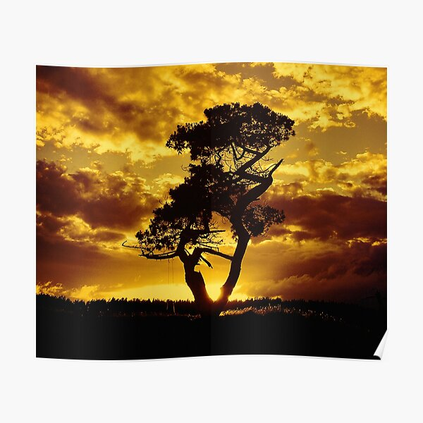 Tree Dance 2 Poster