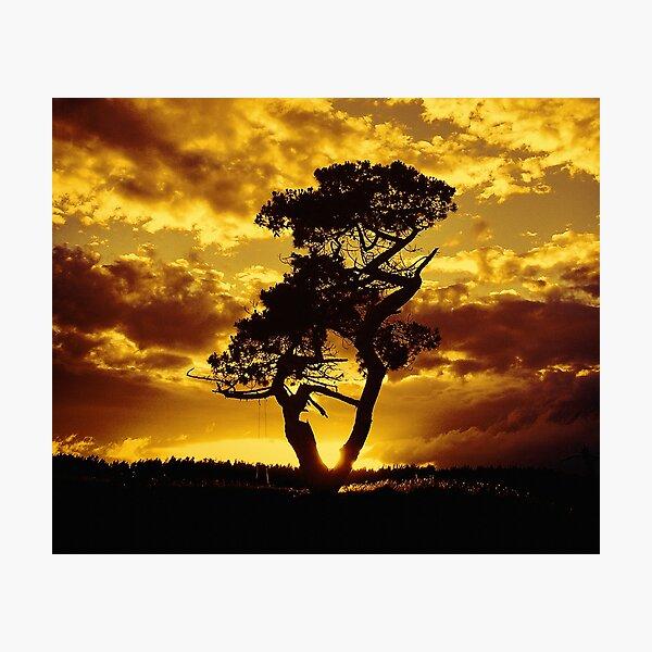 Tree Dance 2 Photographic Print