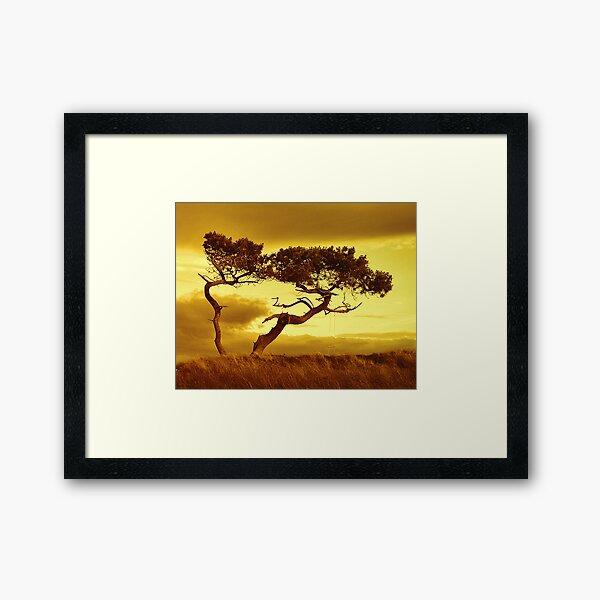 Tree Dance Framed Art Print