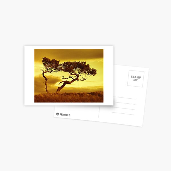 Tree Dance Postcard