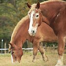 Pair of Chestnuts by Kelly Chiara