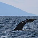 Whale watching in Mexico by Dawne Olson