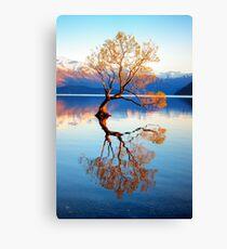 That Wanaka Tree Canvas Print