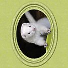 Ferret Sprin iPhone Case by Marie-Agnes