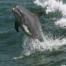 Smiling ................... I'm a happy dolphin by Brenda Dow