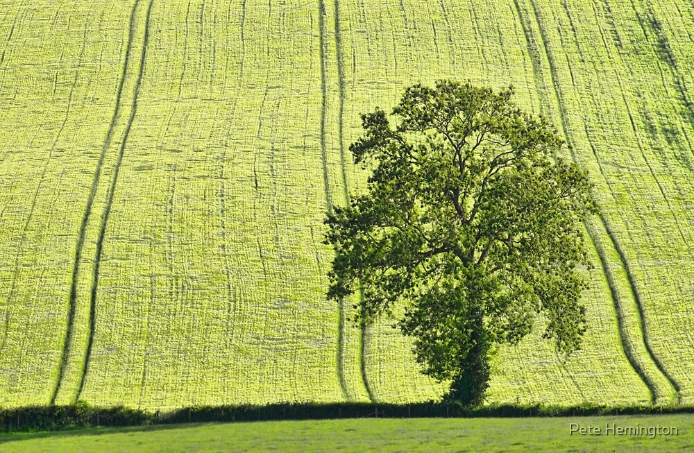 Lone tree by peteton